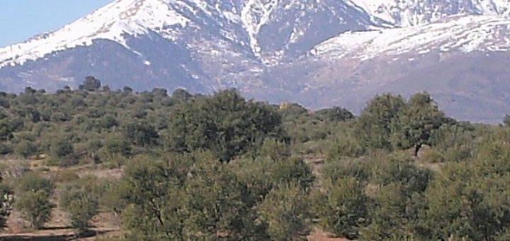 Oliviers en avant-plan du mont Lalla Khadidja